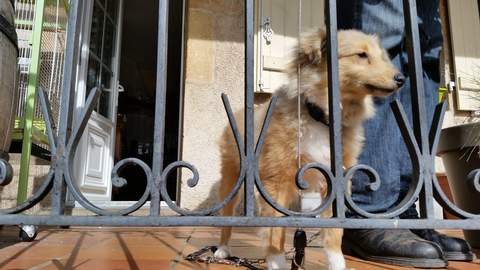 A dog keeps watch over a wine shop in the town of Pommard, Burgundy.