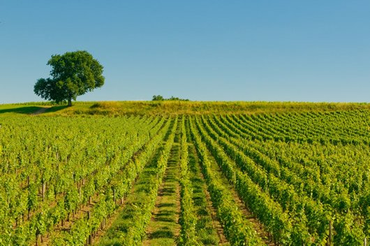 Wine Tours From Paris: See the wonderful vineyards outside of Bordeaux