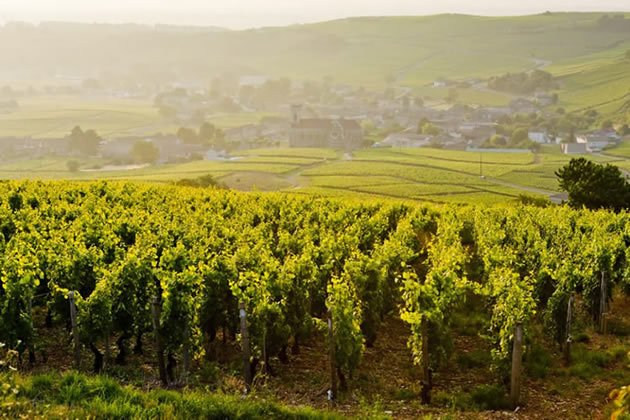 Vineyards near a small town in Burgundy, France - part of our Burgundy day tour from Paris.