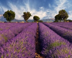 Provence Overnight trip from Paris